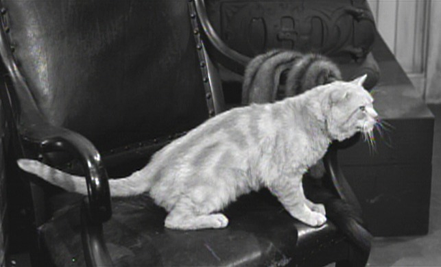 The Matchmaker cat