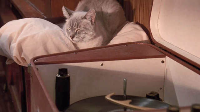 Matinee - cream colored cat sitting beside record player