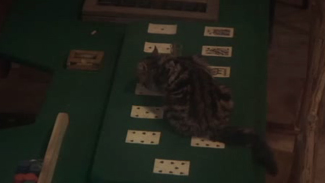 McCabe and Mrs. Miller - long-haired tabby cat on card table