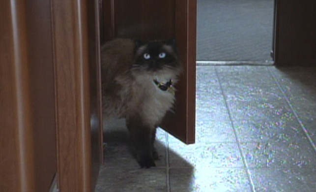 meet the fockers cat using toilet and