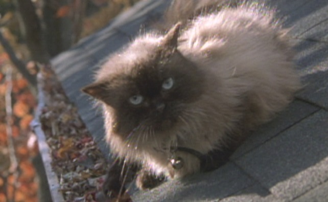 name of cat in meet the parents