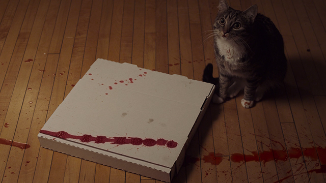 Meow - tabby and white cat on floor with pizza box and blood