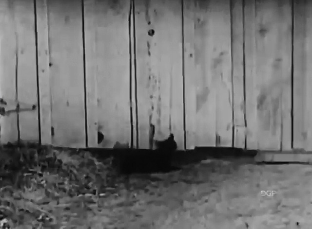 Mickey's Circus - black cat in hole beneath fence