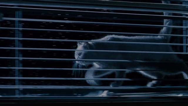 Mindhunters - white cat outside window