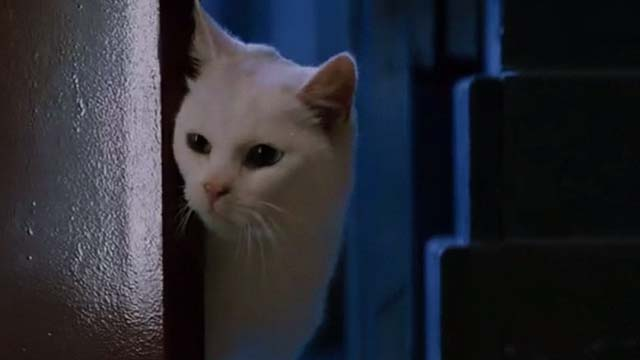 Mindhunters - white cat looking into room from doorway