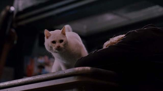 Mindhunters - white cat looking down from table