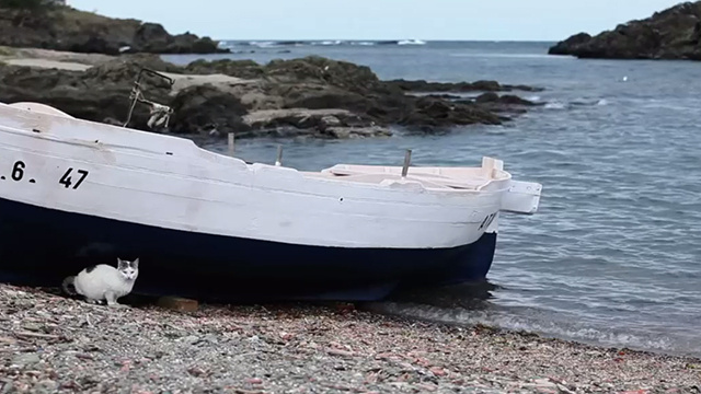 Monogamish - white cat with tabby markings beside boat on beach