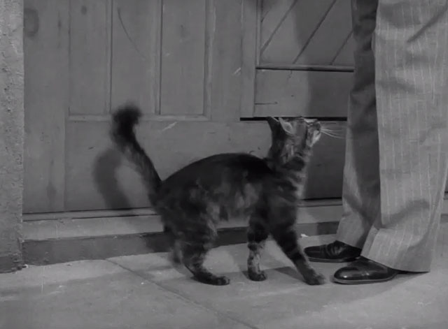 Monsieur Verdoux - cat almost hugging Verdoux's leg
