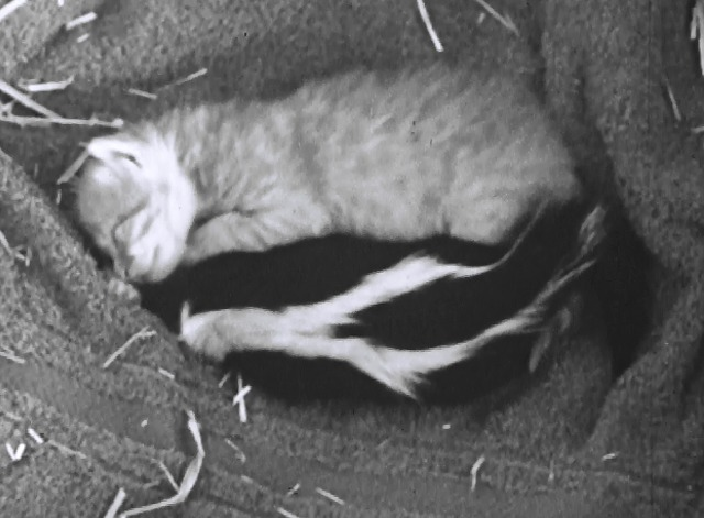 Mother Cat and Her Skunks - orange kitten Puff and baby skunk sleeping together