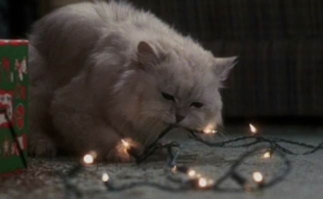 national lampoons christmas vacation angora cat chewing on lights