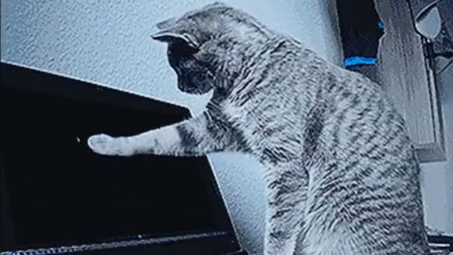 Nerve - cat pawing computer screen