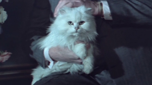 Never Say Never Again - white Angora cat on video on Blofeld's lap