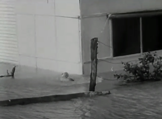 The News Magazine of the Screen, Vol. 7, Issue 2 - tabby cat again swimming through Australian flood waters