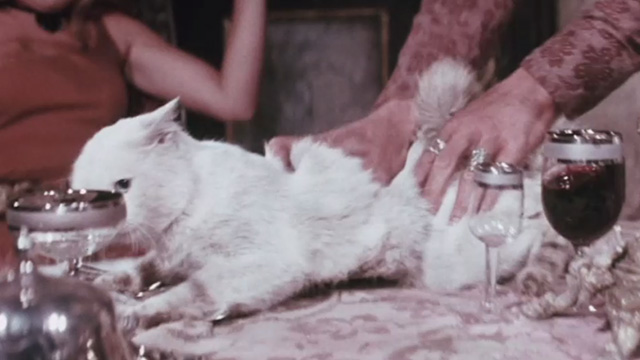 The Night of 1000 Cats - white cat being grabbed violently on table