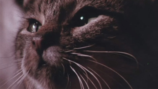 The Night of 1000 Cats - close up of tabby cat