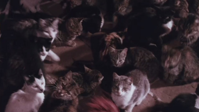 The Night of 1000 Cats - meat being thrown to multiple cats in one large pen