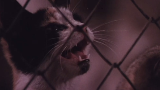 The Night of 1000 Cats - close of calico cat