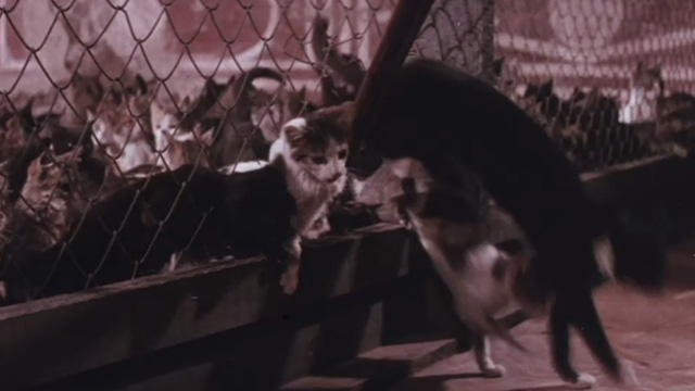 The Night of 1000 Cats - multiple cats escaping from large pen