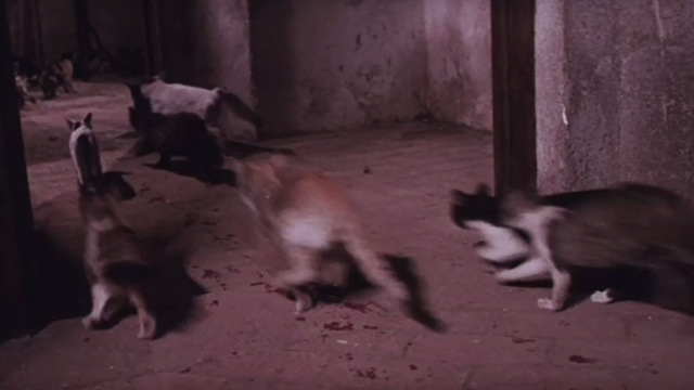 The Night of 1000 Cats - multiple cats running down corridor