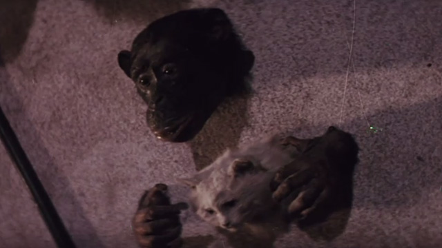 The Night of 1000 Cats - stuffed chimpanzee with cat head on wall