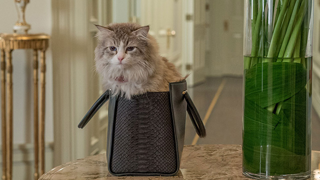 Nine Lives - Norwegian Forest Cat Mr. Fuzzypants pooping in purse