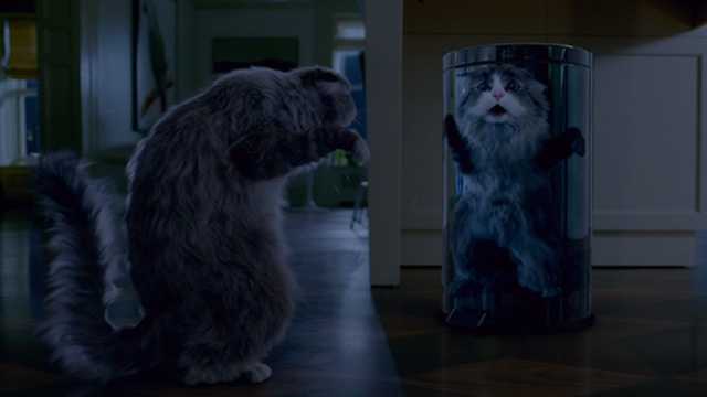 Nine Lives - Norwegian Forest Cat Mr. Fuzzypants scared of reflection on trash can