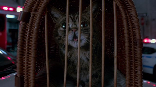 Nine Lives - Lil Bub in cage