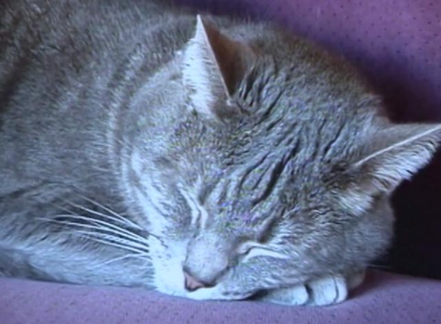 Nine Lives (The Eternal Moment of Now) - gray cat Pinky sleeping on couch closer