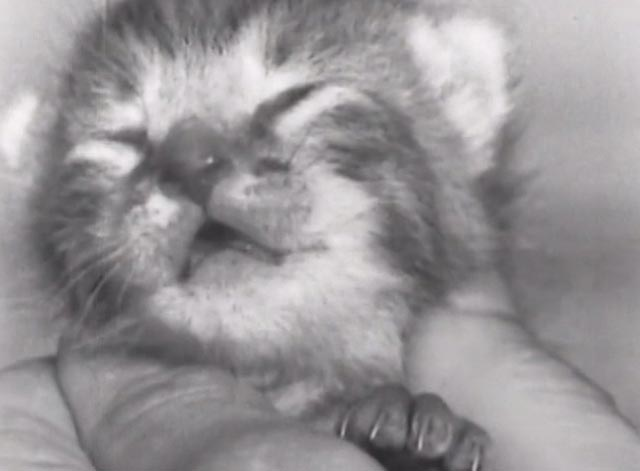 Nine Lives (The Eternal Moment of Now) - baby tabby kitten in person's hand