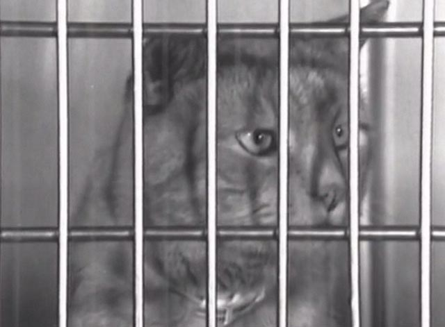 Nine Lives (The Eternal Moment of Now) - close up of cat in cage