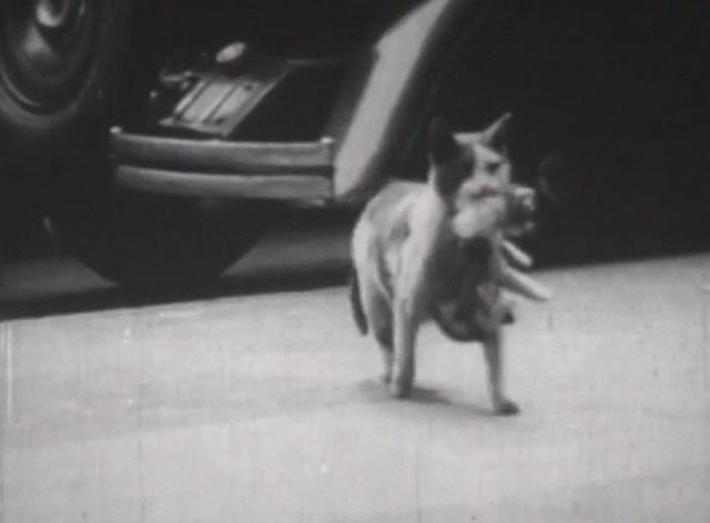 Nine Lives (The Eternal Moment of Now) - mother cat carrying kitten on sidewalk