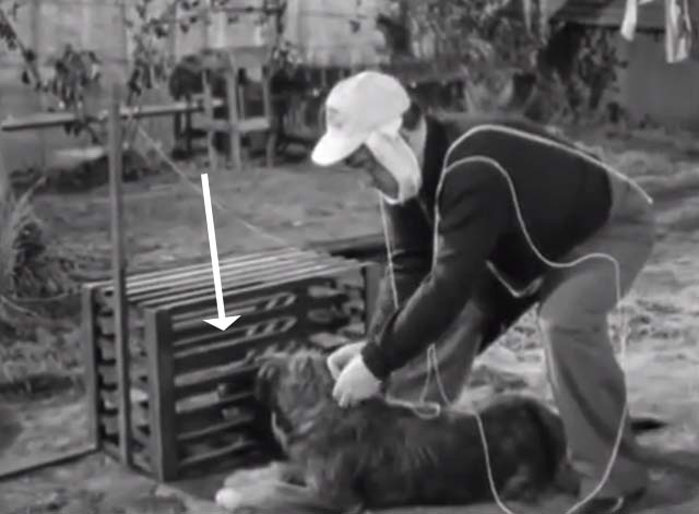 The Noose Hangs High - Tommy Lou Costello tying string to dog with Siamese cat in crate