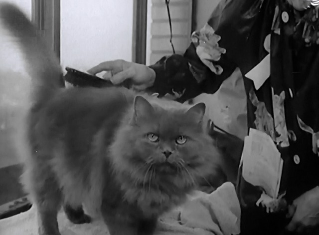 Not a Mouse in the House newsreel gray Persian cat being brushed