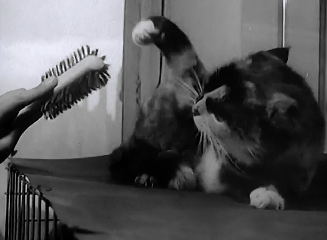 Not a Mouse in the House newsreel calico cat batting brush