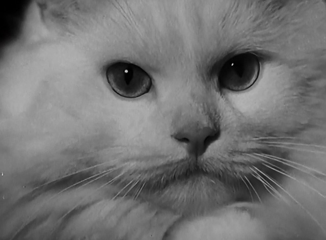 Not a Mouse in the House newsreel Persian cat close up