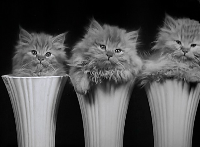 Not a Mouse in the House newsreel row of Angora kittens in vases