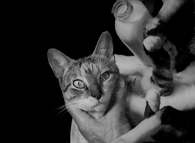 Not a Mouse in the House newsreel tabby cat held by man with milk in bottle
