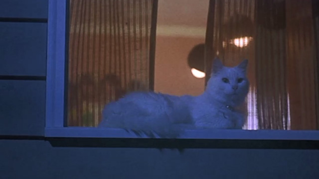 Now and Then - white cat sitting on window pane