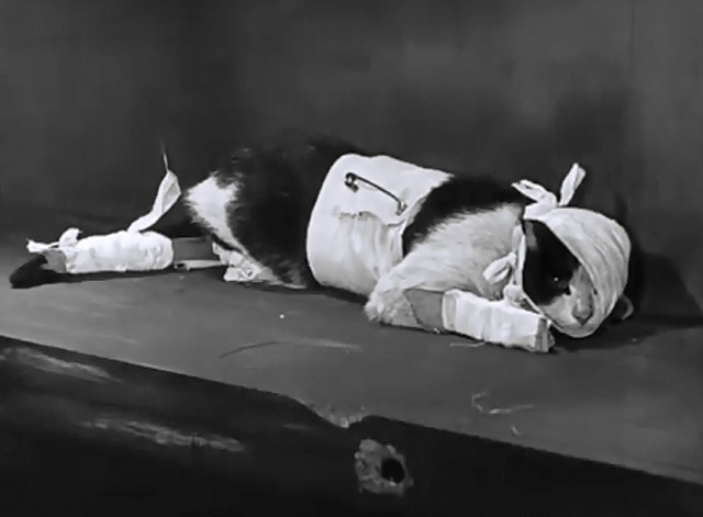 Now You Tell one - tuxedo cat wrapped in bandages