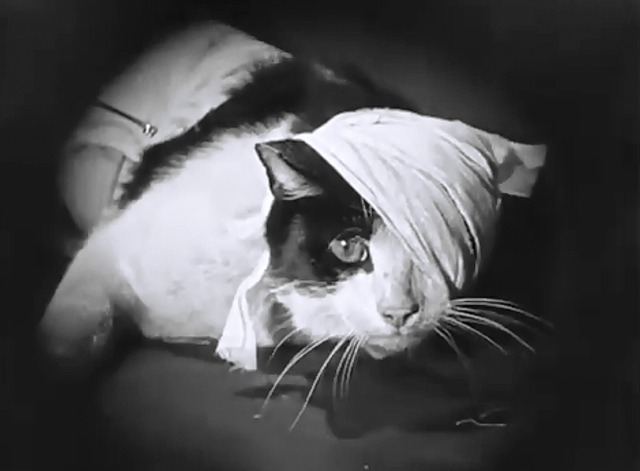 Now You Tell one - tuxedo cat wrapped in bandages close
