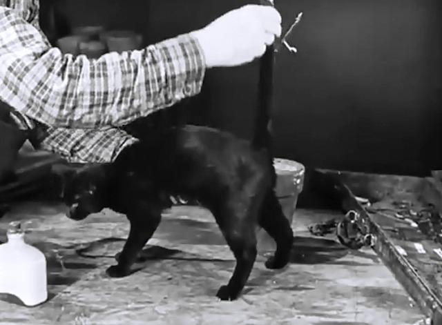 Now You Tell one - Charley Bowers puts tail on black cat close
