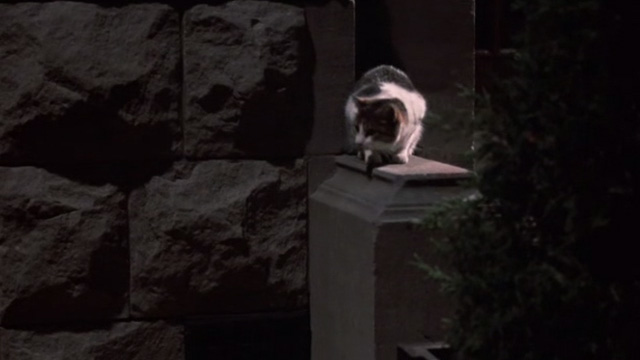 Of Unknown Origin - tabby and white cat outside brownstone