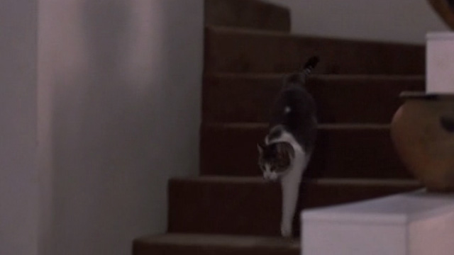 Of Unknown Origin - tabby and white cat walking down stairs