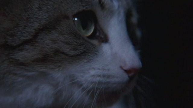 Of Unknown Origin - close up of tabby and white cat