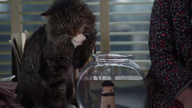 One Fine Day - Maine Coon cat Lois Lane on credenza licking paw beside fish bowl