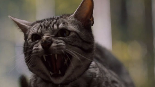 One Missed Call - Egyptian Mau cat screeching close up