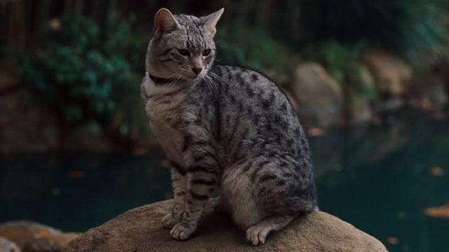 One Missed Call - Egyptian Mau cat sitting by pond