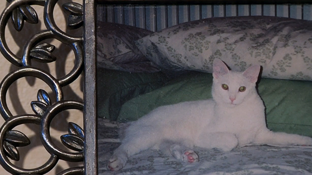 One Year Lease - photo of white cat Casper in frame