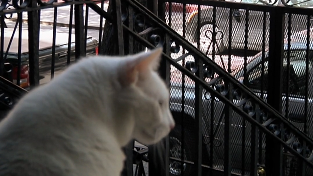 One Year Lease - white cat Casper looking over New York street