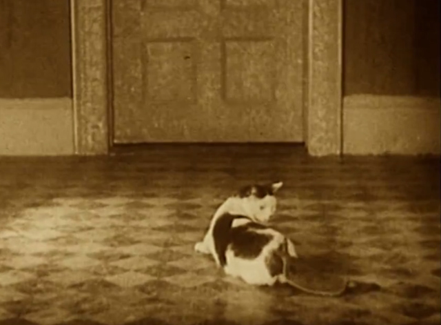 Our Gang - Barnum and Ringling Inc. - white cat with markings with hot water bottle on tail different